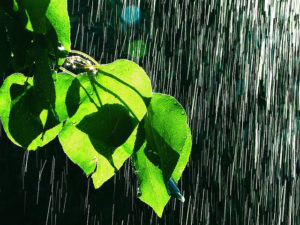 pioggia estate